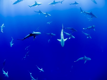 Sharks circling targeting users